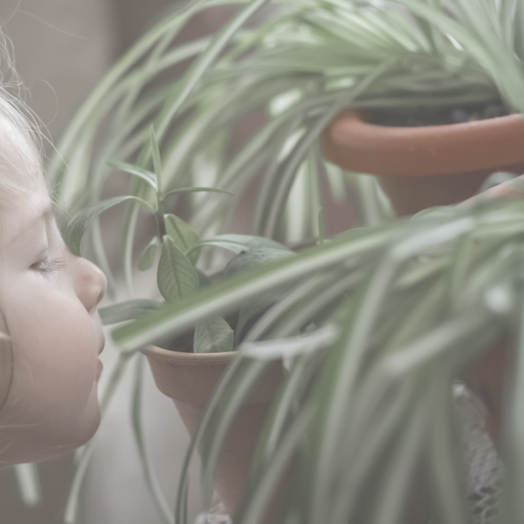 Child smelling a plant